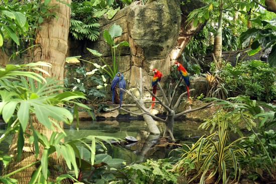 Moody Gardens Tropical Rainforest - Picture of Inn at the Waterpark ...