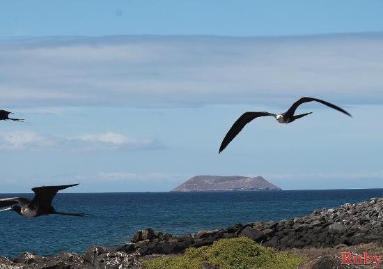 North Seymour Island