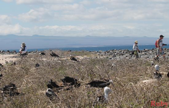 Baltra, Equador: Fragatas de Islas Seymour North, Galápagos