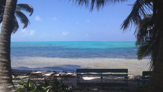 Blue Sea Diving Services