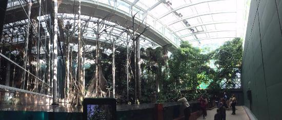 Rainforest - Picture of CosmoCaixa Barcelona, Barcelona ...