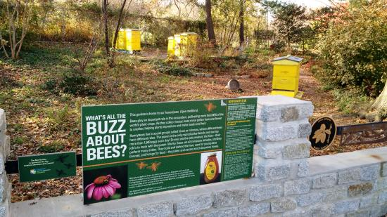 Queens Botanical Garden: Bees