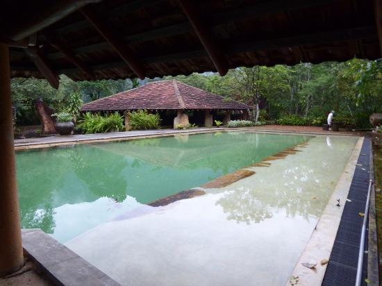Rainforest Edge : View of pool with dining area in background