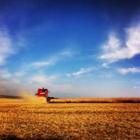 Quinze de Novembro, RS: Amo a colheita... e adorei registrar esse momento