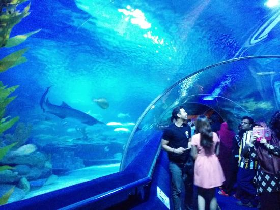 In Aquaria KLCC - Picture of Aquaria KLCC, Kuala Lumpur - TripAdvisor