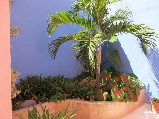 Coral Reef Inn : There is lots of greenery and plants