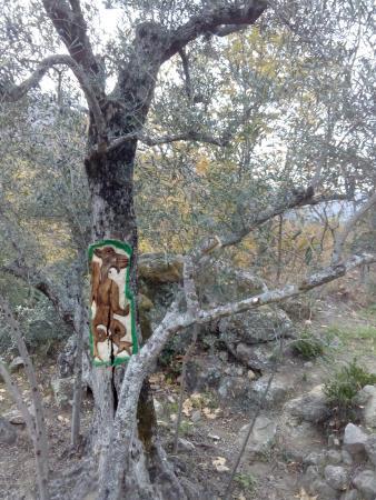 San Martin del Castanar, Испания: IMG_20151207_154709_large.jpg