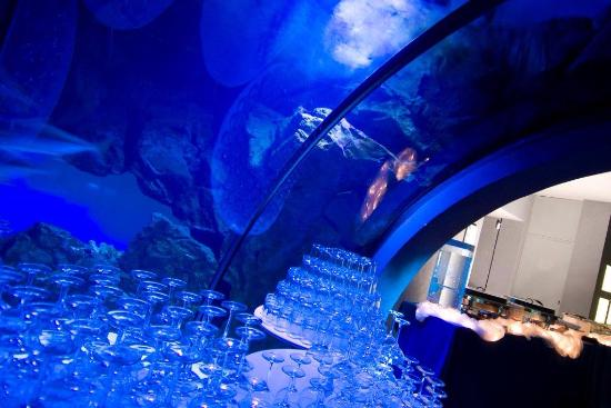 Civic Aquarium of Milan : ... ?? ??? - Picture of Acquario civico, Milan - TripAdvisor