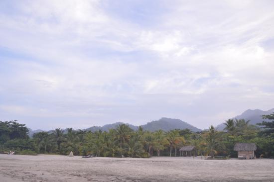 Playa Koralia: La playa del hotel