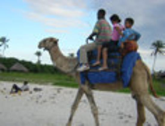 Sunrise Beach Resort: Camel RIDE