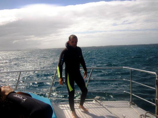 Dyer Island: con wetsuit bien grueso