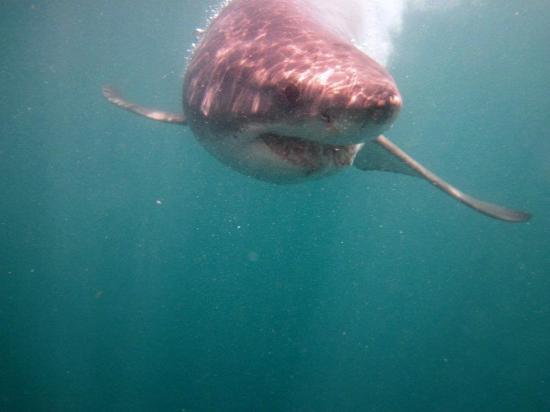 Dyer Island: y se acerca el tiburón