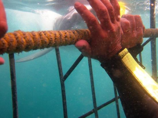 Dyer Island: mi mano dentro de la jaula pero cerca al tiburón :)