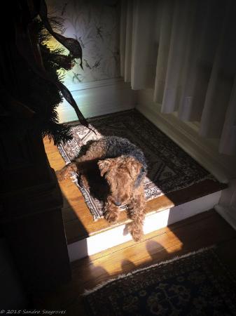 Hanna House Bed & Breakfast: Katie enjoying the sun