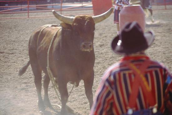 Cheyenne-billede