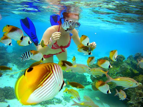 The Rarotongan Beach Resort Lagoonarium 163 2 5 Updated 2018 Room Prices Reviews Rarotonga Aroa Tripadvisor