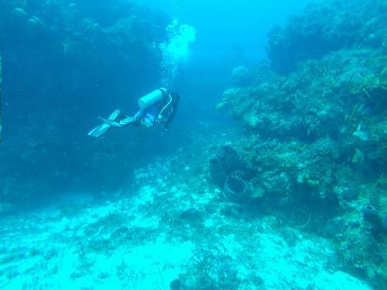 Deep blue scuba diving picture of deep blue scuba diving - Dive deep blue ...