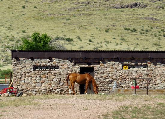 D.D. Gamble Guest Lodge: Horses and cattle roam freely on the spacious ranch.