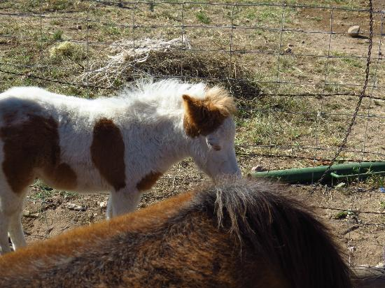 D.D. Gamble Guest Lodge: Play with the mini horses to your heart's content.
