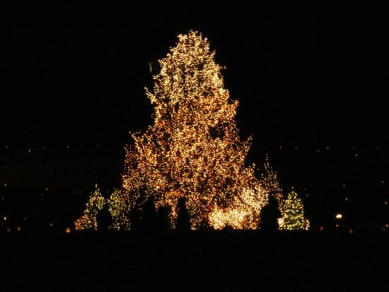 Biltmore At Christmas.Great Outside Christmas Tree At Biltmore Estate Picture Of