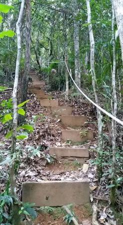 Upper Crystal Creek, Australia: Lots of stairs to assist in the climb