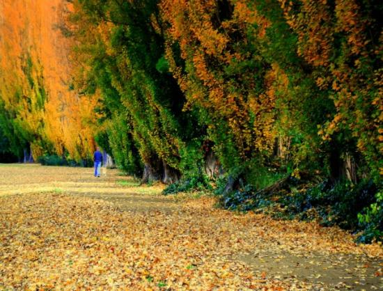 New Norfolk, Australien: Crunching leaves along the Lachlan in Tynwald Park