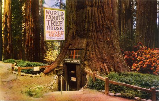 San Pablo, كاليفورنيا: World Famous Tree House Redwood