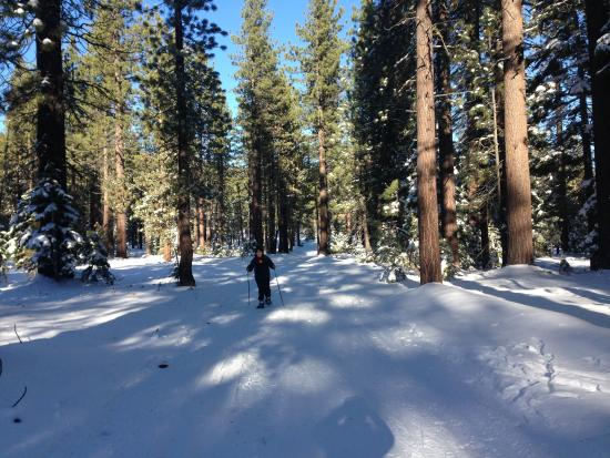 Carnelian Bay, Kalifornia: cross country ski just couple of miles away