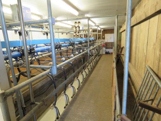 La salle de traite foto van la chevrerie d 39 ozo izier tripadvisor - Fotos van salle d eau ...
