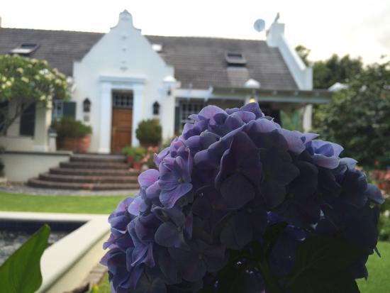 Kidger House Guest House: Christmas roses