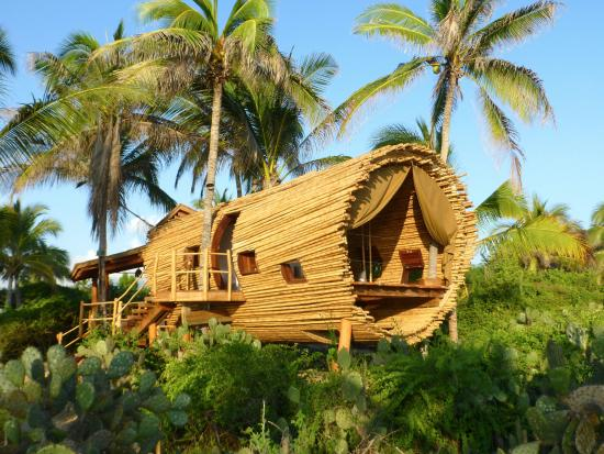 Tree House Picture Of Playa Viva Petatlan Tripadvisor