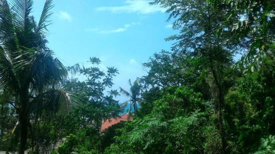 Orchids Resort: Прекрасный вид с балкона :)
