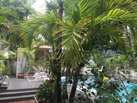 Mango Tree Inn: Garden and swimming pool
