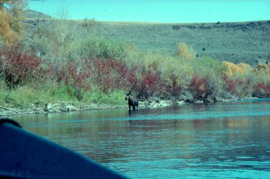 Swan Valley, Αϊντάχο: wildlife company on the South Fork of the Snake River