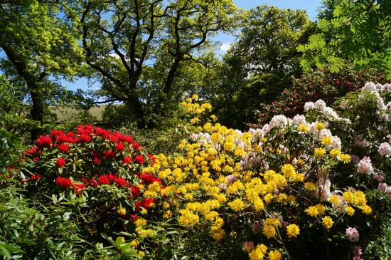 Invergarry, UK: Colour in the grounds during June