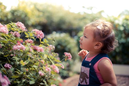 Inbio Parque: jardines