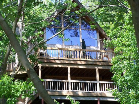 Saugatuck, MI: Tree House
