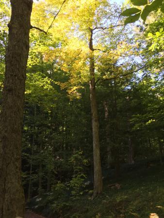 Clinton, NY: The sun coming through the trees
