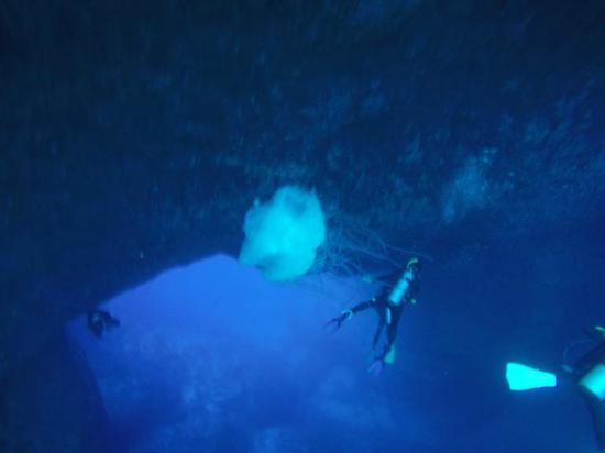 Micronesian Divers Association: Jelly fish and Blue Hole Guam