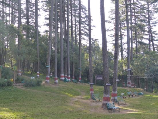 Dhanaulti, India: Another View
