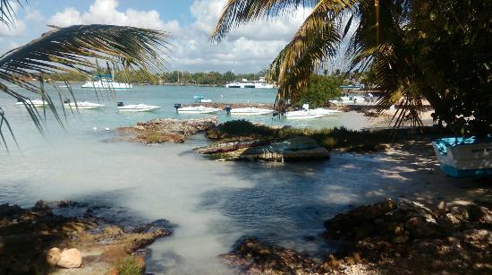 Bayahibe, Dominikanische Republik: IMAG0110_large.jpg