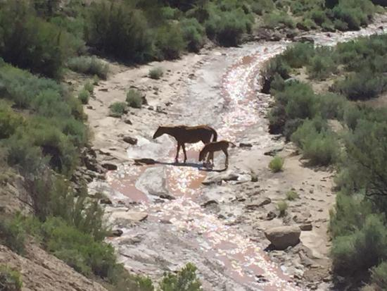 Grand Junction, CO: Chevaux