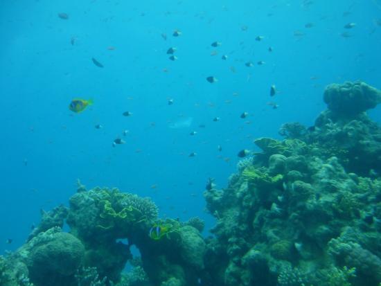 Underwater Observatory Marine Park: ??? ?? ????????? ...
