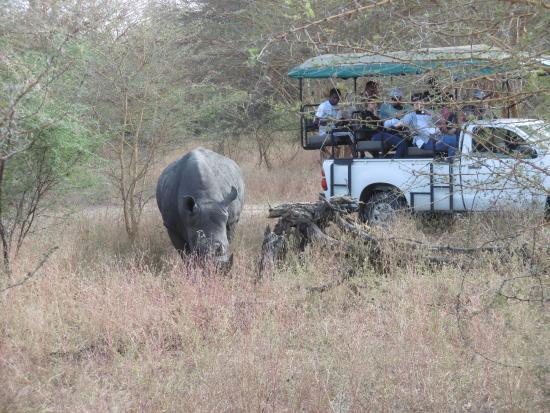 Reserve De Bandia : Rhinocéros blanc