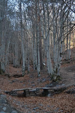 Bustares, España: Hayedo tejera negra