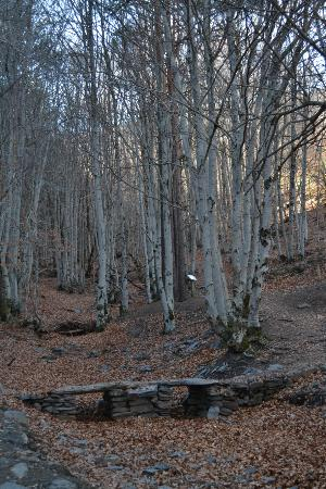 Bustares, Spanyol: Hayedo tejera negra