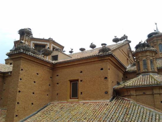 Alfaro, Spanien: Cicogne