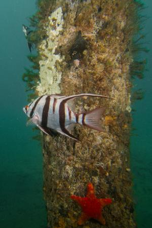 Sea life on Port Noarlunga Reef