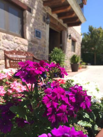 Iribarnia Hotel Rural: Entrada con la belleza de las plantas.