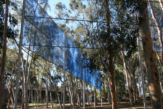 University of California San Diego: Cutting through the trees